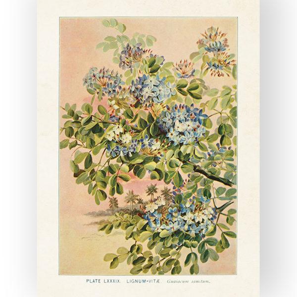 """Kaunis, vintage-henkinen Sköna Ting juliste """"Holywood"""". Painettu tukevalle, mattapintaiselle pahville. 18 x 24 cm. Vanhat opetustaulukuvat ihana lahjaidea!"""